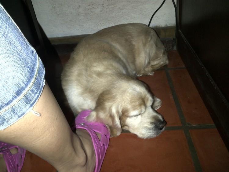 Carta De Despedida A Mi Cachorro by Sonia Valdés